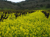 Napa Valley in Spring by Doug Croft